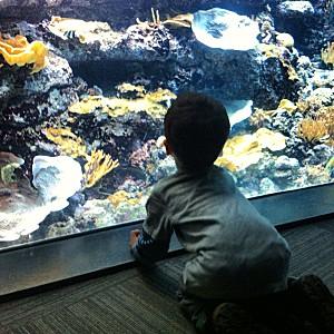 aquarium enfant