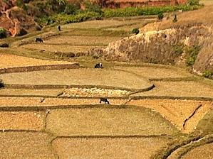 rizière madagascar