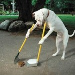Sur le chemin de la propreté, ou presque… #2