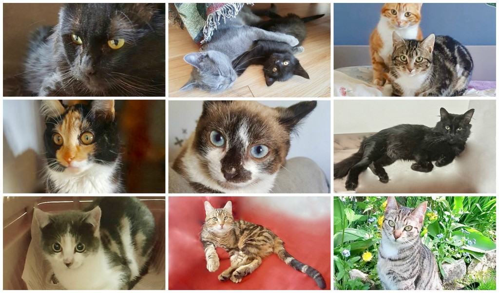 cats in the air collage
